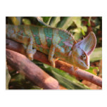 camaleón multicolor postales