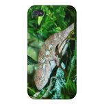 Camaleón que cambia en el ambiente verde iPhone 4 protector