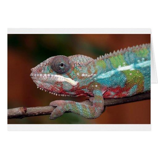 camaleón tarjeta de felicitación