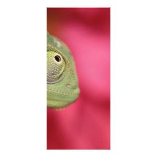 camaleón plantillas de lonas