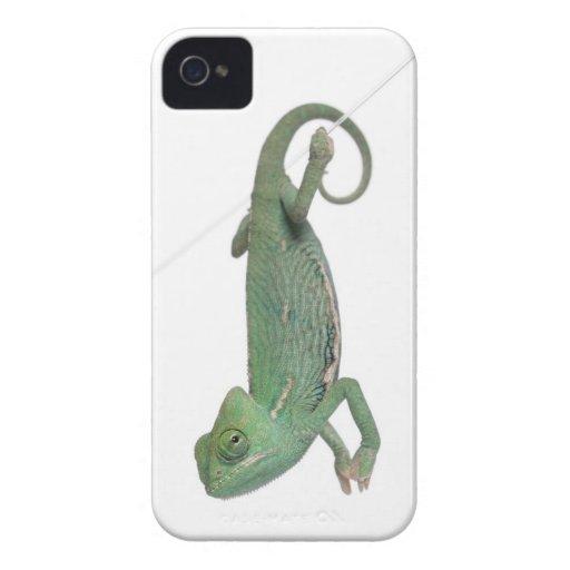Camaleón velado joven, calyptratus del Chamaeleo Funda Para iPhone 4 De Case-Mate