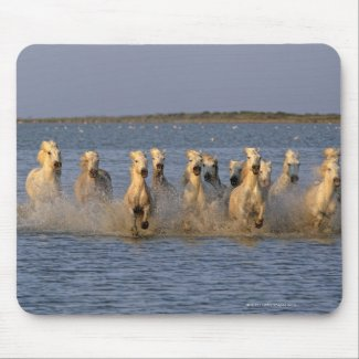 Camargue Horse (Equus caballus) zazzle_mousepad