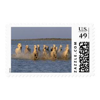 Camargue Horse (Equus caballus) Postage Stamp