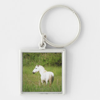 Camargue Horse in the Alpes Cote d'Azur of the Key Chains