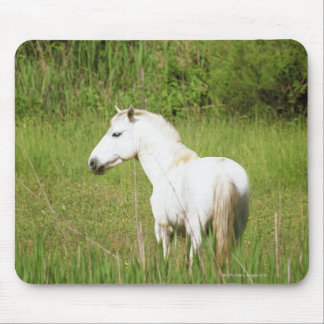 Camargue Horse in the Alpes Cote d'Azur of the Mouse Pad