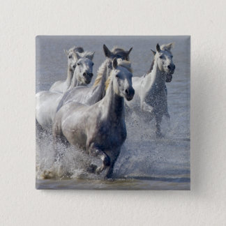 Camargue horses running on marshland to cross button