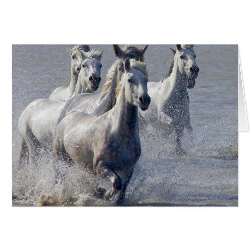 Camargue horses running on marshland to cross cards
