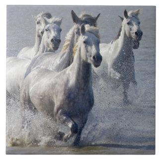 Camargue horses running on marshland to cross large square tile