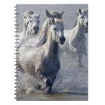 Camargue horses running on marshland to cross notebook