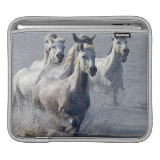 Camargue horses running on marshland to cross sleeve for iPads