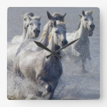 Camargue horses running on marshland to cross square wall clock