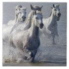 Camargue horses running on marshland to cross tile