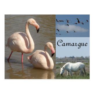 Camargue Postcard