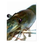 camarón postal