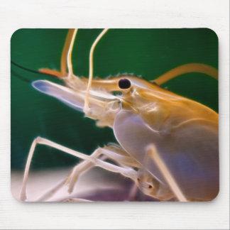 Camarón que brilla intensamente - Mousepad