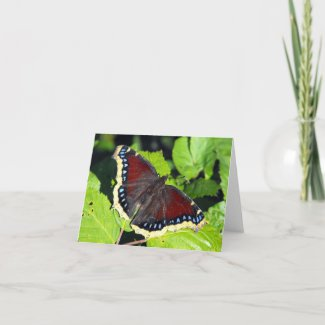 Camberwell Beauty or Mourning Cloak Butterfly Card