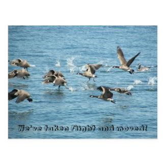 Cambio de la foto de los gansos del vuelo de postales