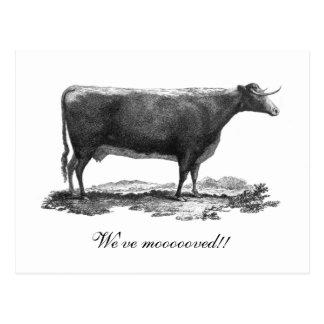 Cambio de la vaca del vintage de tarjeta de la postal