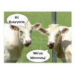 Cambio de las vacas que habla de postal de la dire
