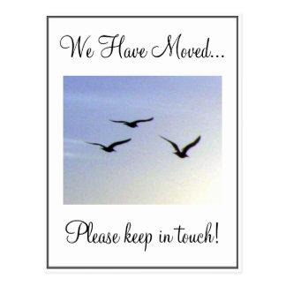 Cambio de pájaros de vuelo de postal de la