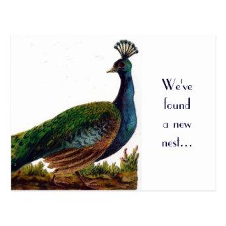 Cambio del pavo real del vintage de postal de la