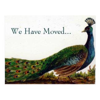 Cambio del pavo real del vintage de postales de la