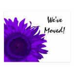 Cambio púrpura de la flor del arte pop de direcció postales