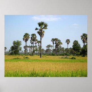 Cambodia Rice Field Poster