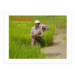 Cambodia-transplanting rice seedlings post cards