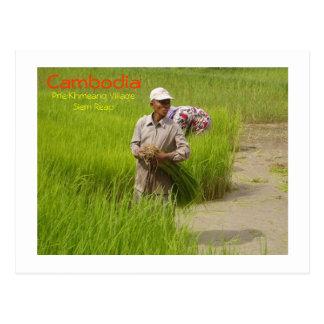 Cambodia-transplanting rice seedlings postcard