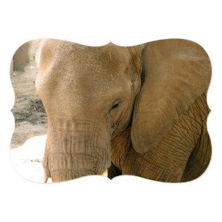Cambodian Elephant Card