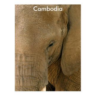 Cambodian Elephant Postcard