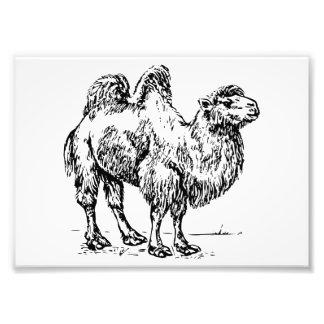 Camel 1 photo print