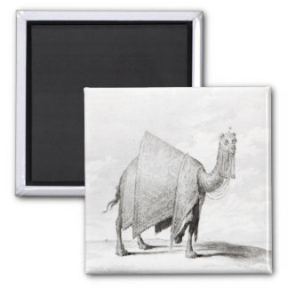 Camel 2 Inch Square Magnet