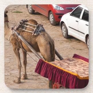 Camel and car coaster