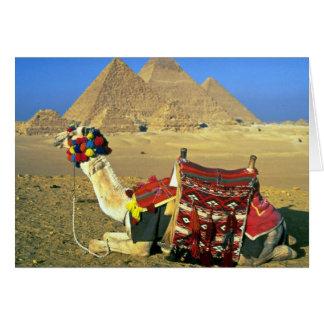 Camel and pyramids, Cairo, Egypt Greeting Card
