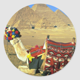 Camel and pyramids, Cairo, Egypt Classic Round Sticker