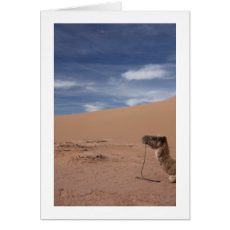 Camel at the Dunes Card