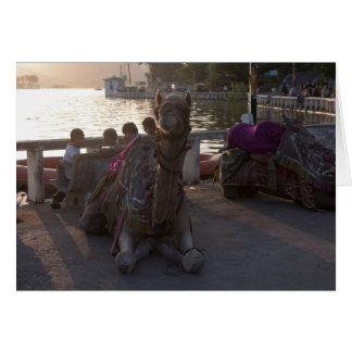 Camel at the shore of a lake in Udaipur Greeting Card