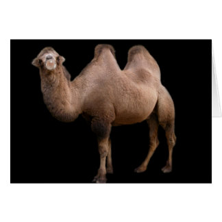 Camel Bubble Greeting Card