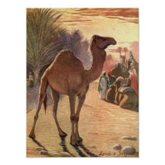 Camel by Louis Sargent, Vintage Wild Animals Poster
