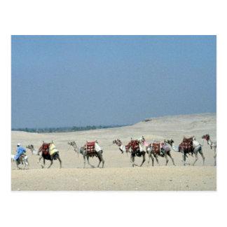 Camel caravan crossing the Sahara Postcard