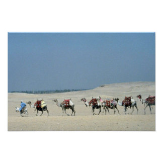 Camel caravan crossing the Sahara Poster