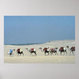 Camel caravan crossing the Sahara Posters