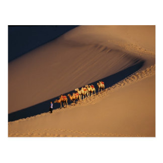 Camel caravan on the desert, Dunhuang, Gansu Postcard
