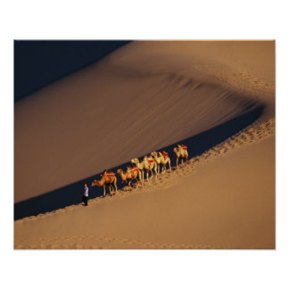 Camel caravan on the desert, Dunhuang, Gansu Print