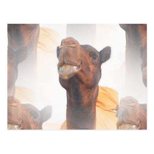 Camel Collage  Postcards