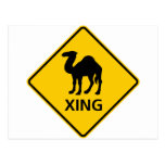 Camel Crossing Highway Sign Post Card