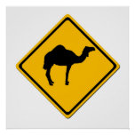 Camel Crossing Poster