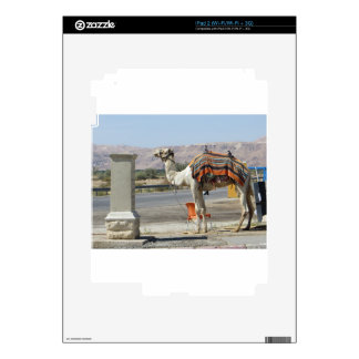 Camel Decals For iPad 2